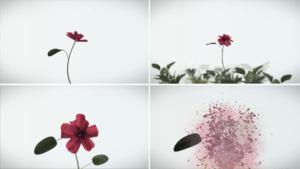 Flower all